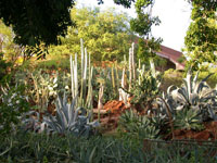 UCactus and Succulent Garden at Kapiolani Community College (2004)